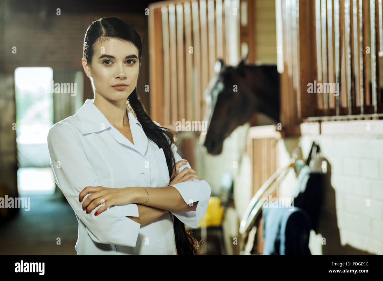 Worker of epidemiological service coming to stable - Stock Image