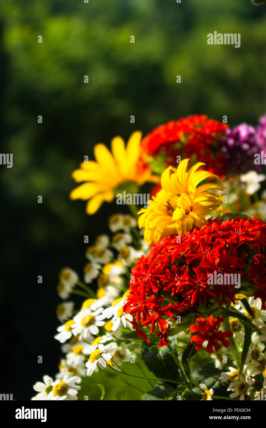 A Colorful Bouquet Of Bright Spring Flowers Of Various Types Close