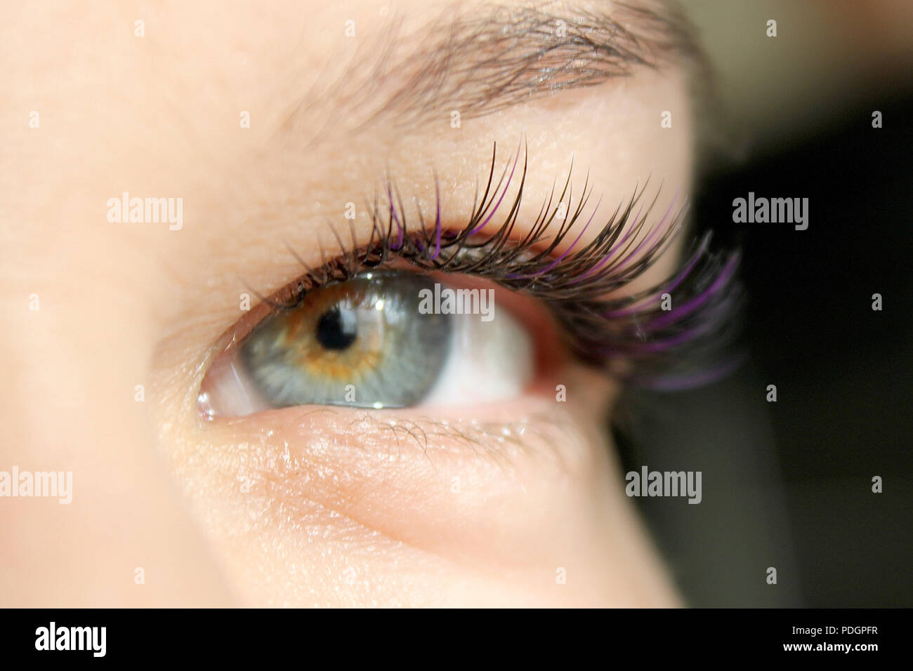 2af6ebfc15e Close up view of beautiful woman eye with long false eyelashes. Eyelash  Extension Procedure.