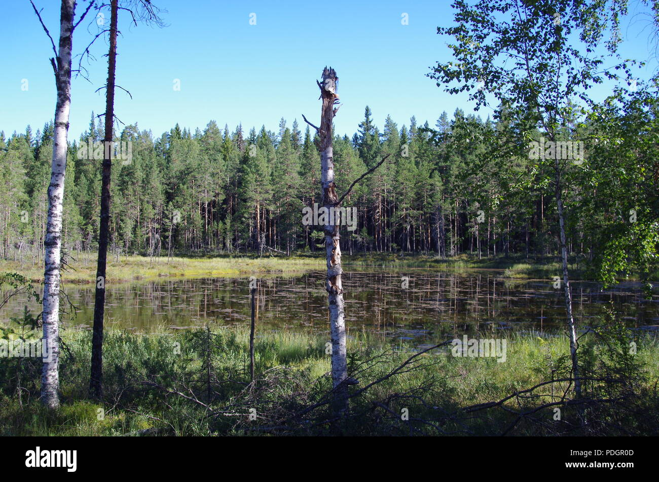 Beautiful calm and lonely lake in the forests of Dalarna - Stock Image