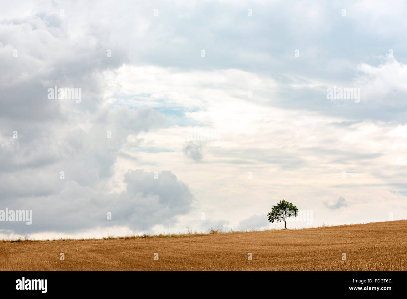 Empty minimalist landscape with one tree on the horizon Stock Photo