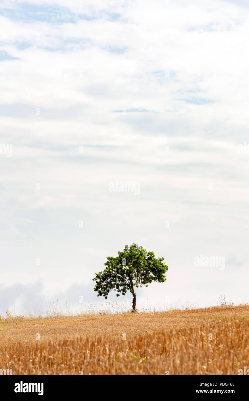 Empty minimalist landscape with one tree on the horizon - Stock Image