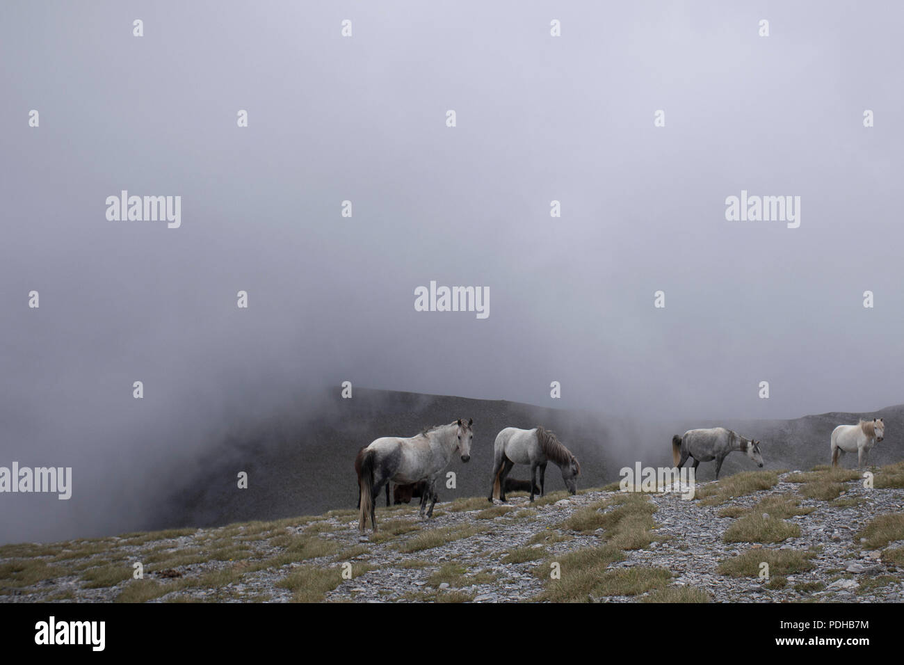 Katerini, Greece. 9th Aug, 2018. Photo taken on Aug. 8, 2018 shows wild horses in the alpine zone of Mount Olympus, northern Greece. Mount Olympus is the highest mountain in Greece with the highest peak of 2,917 meters. Olympus is notable in Greek mythology as the home of the Greek gods. Credit: Dimitris Tosidis/Xinhua/Alamy Live News - Stock Image