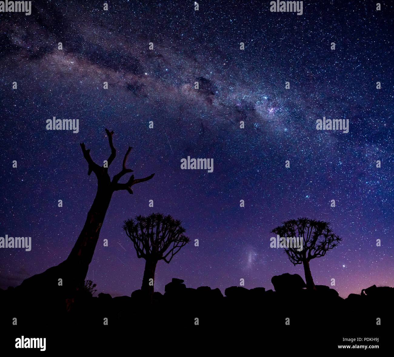 The Milky Way shines over quivertrees in Namibia - Stock Image