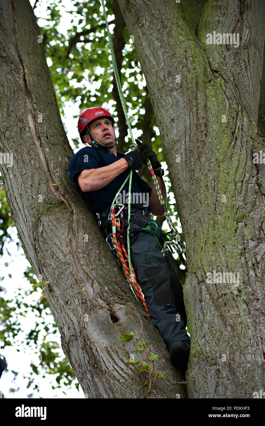 Demonstration of tree rescue techniques at the Conference for Groundsmen and Park Managers at the Royal Windsor Racecourse,Windsor near London UK. - Stock Image