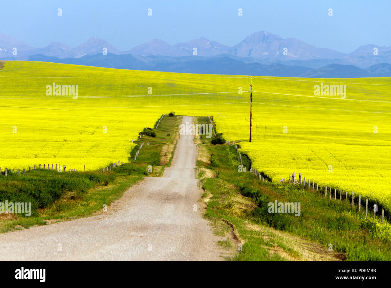 Surrounded By Canoloa Feilds Quotes: Canada Prairie Road Stock Photos & Canada Prairie Road