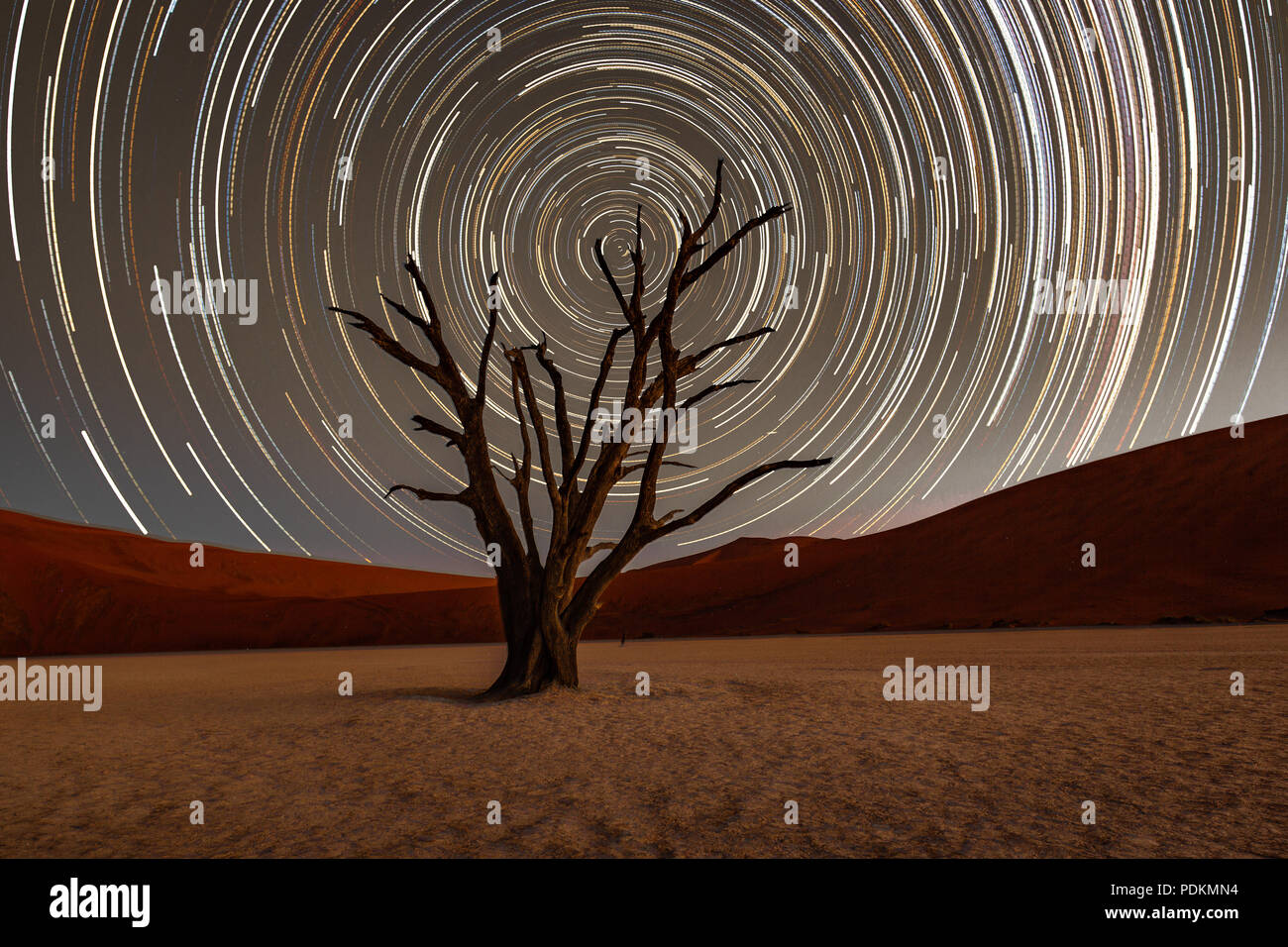 Star trails circle over a camelthorn tree in Deadvlie, Namibia - Stock Image