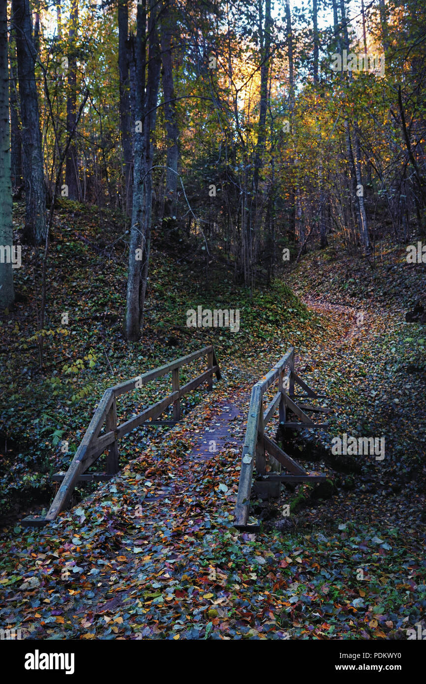 The bridge across the ravine with uzkon path between the hills with trees in the autumn forest in the evening Stock Photo