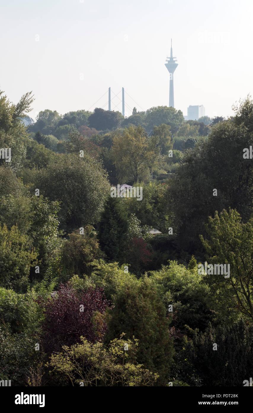 Im Vordergrund die Kleingärten vor den Oberkassler Rheinwiesen Stock Photo