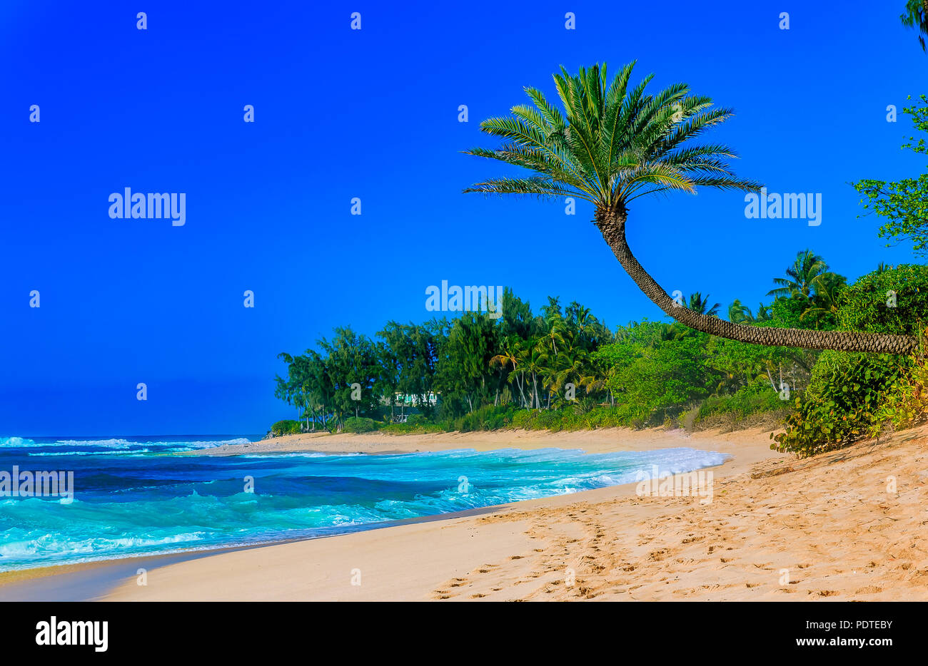 Palm tree hanging over a tropical lagoon beach with blue sky - Stock Image
