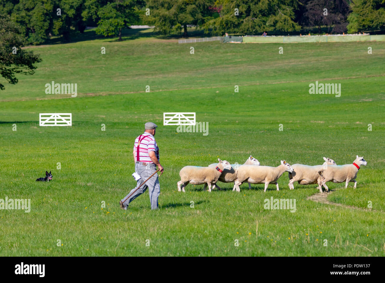 Nannerch, North Wales, 9th August 2018. UK Weather: Hot and sunny weather perfect for the Welsh National Sheep Dog Trials being held in the rural vill - Stock Image