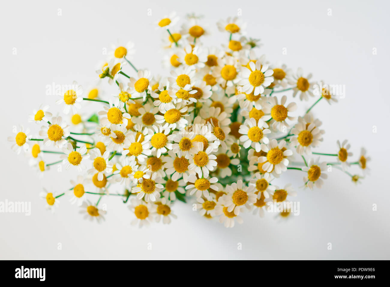 Macro photography of little daisy flowers bouquet over white soft macro photography of little daisy flowers bouquet over white soft focus top view close up composition izmirmasajfo