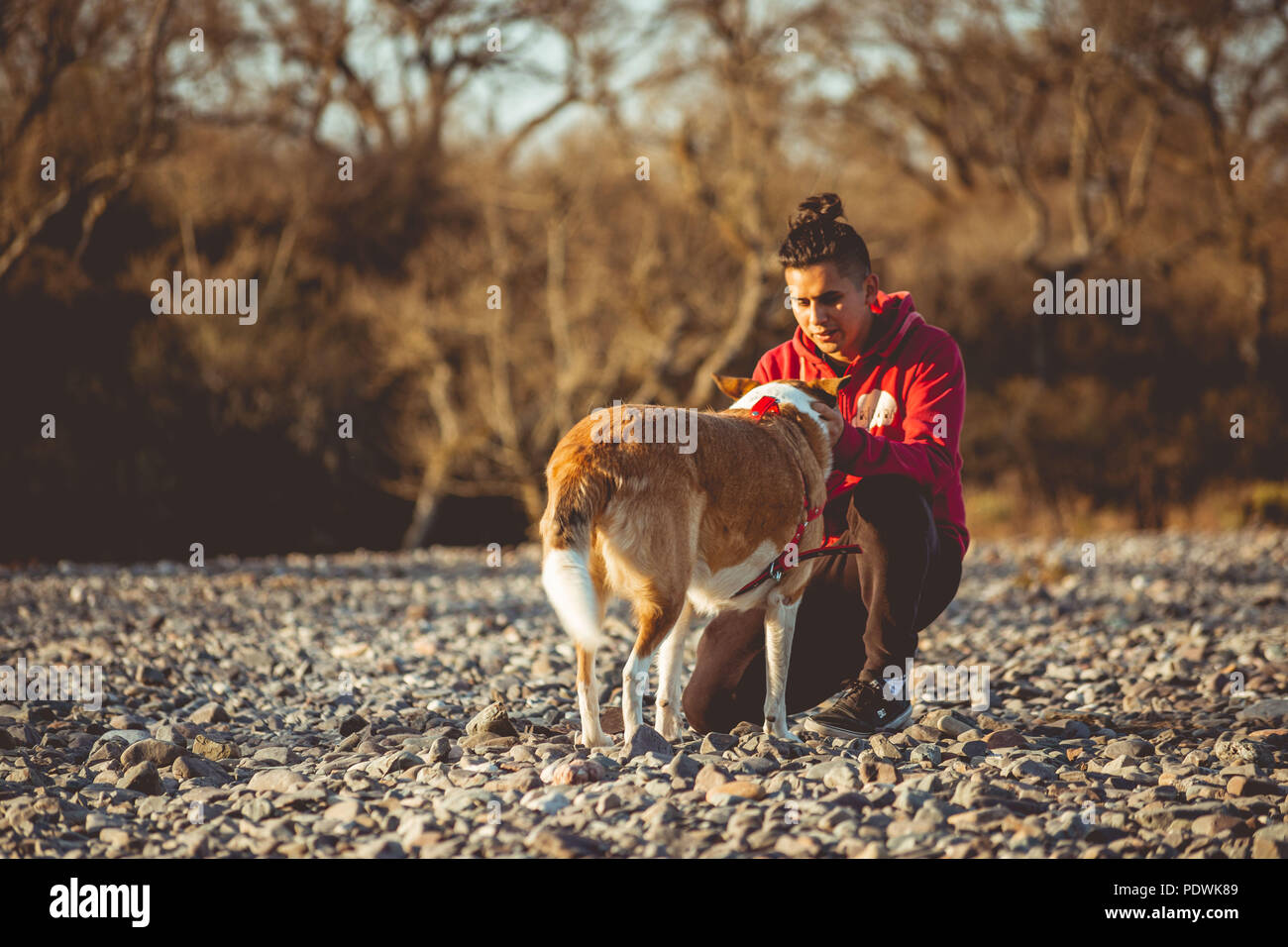 Dog and human in park - Stock Image