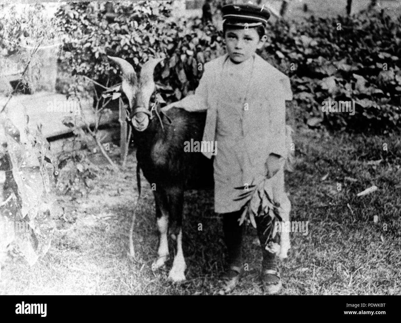 251 StateLibQld 1 207205 Billy Sheppard and his goat, Brownie - Stock Image