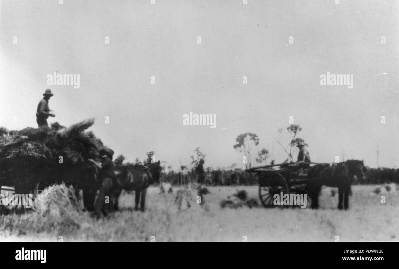 271 StateLibQld 1 71319 Hay-making at a property in Warroon, Queensland, 1930 - Stock Image