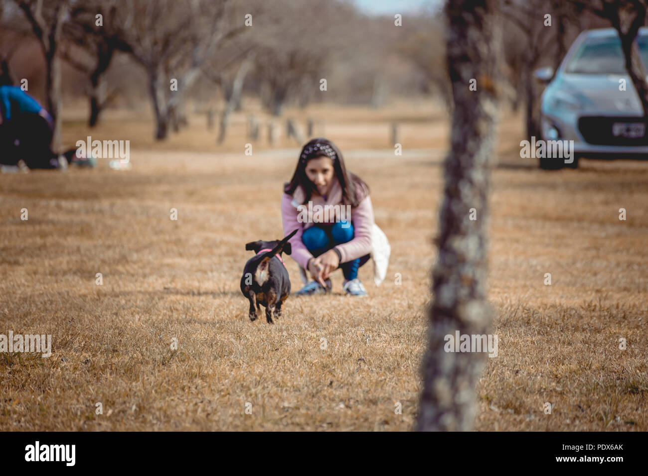 Ypung girl playing with dogs - Stock Image