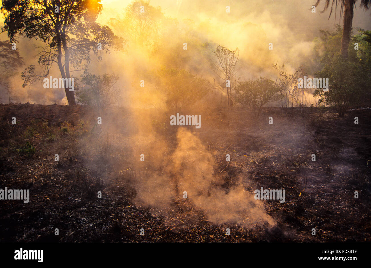 Rainforest Being Burnt for Cattle Ranching, Paragominas, Para State, Brazil, South America. Stock Photo