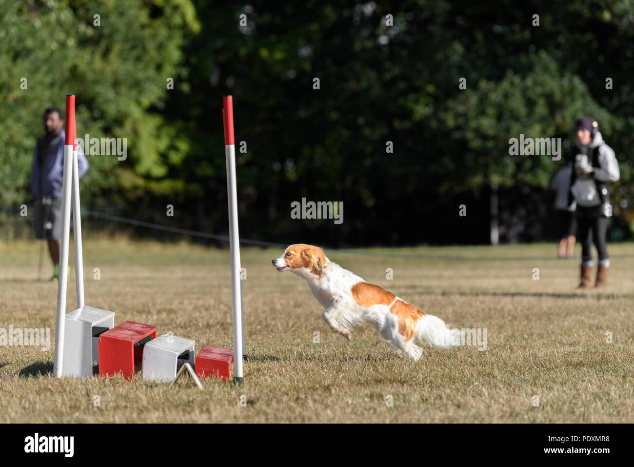 Rockingham Castle, Corby, England. 11th August 2018. With a look of keen concentration, a competing dog launches itself at a hurdle in the Kennel Club's international dog agility competition in the Great Park of Rockingham castle, Corby, England, on 1th August 2018. Credit: Michael Foley/Alamy Live News Stock Photo