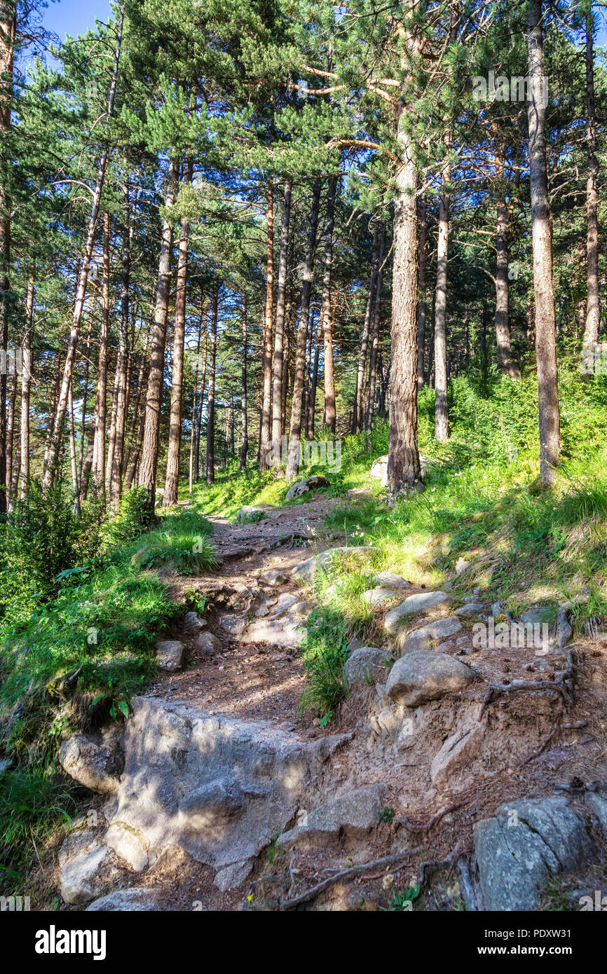 Trail in a coniferous forest in the mountains. Wild woods landscape. Travel concept Stock Photo