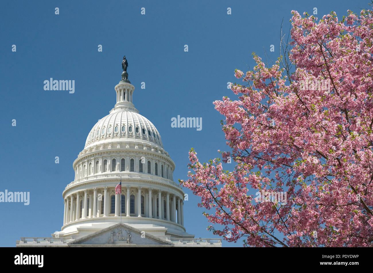 U.S. Capitol Building, Washington D.C., Cherry Blossom Festival - Stock Image