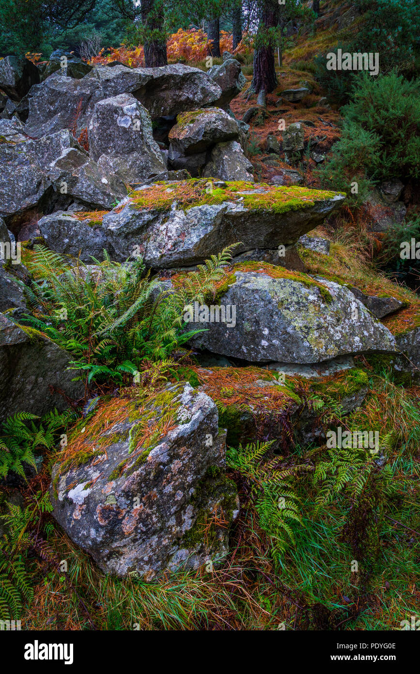 Rocks which have been quarried from a very old quarry in Blacktop Woods, Cults, Aberdeenshire. Stock Photo