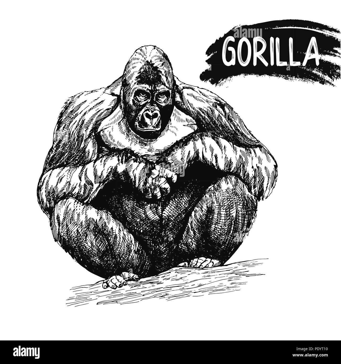 7af24f818 Hand drawn sketch style gorilla isolated on white background. Vector  illustration. Available for any project