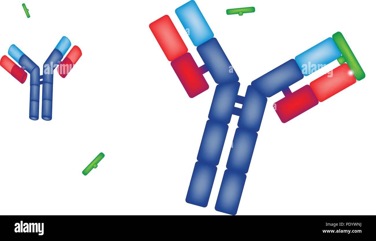 Antigen Antibody Stock Photos Amp Antigen Antibody Stock
