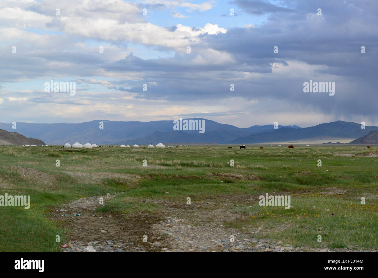 Landscape in the province Bayan-Ölgii, Mongolia. Ger camp and cattle - Stock Image