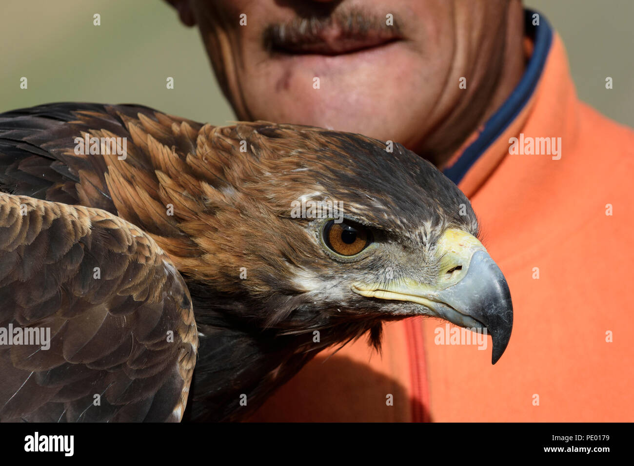 A Kazakh eagle hunter with his golden eagle in Bayan-Olgii, Mongolia. - Stock Image