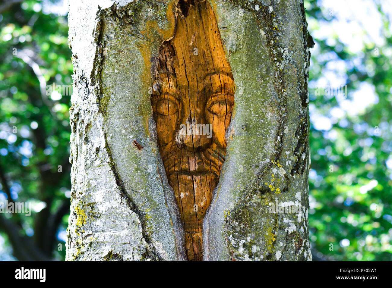 Old women face in a tree - Stock Image