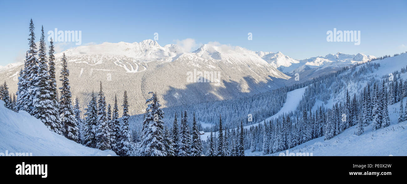 Snowy mountain trees with a view overlooking Blackcomb Mountain. Stock Photo