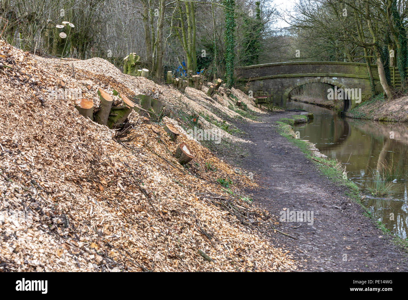 Wood chippings after trees have been cut down on the Macclesfield canal in Cheshire as part of a conservation based canal towpath maintenance - Stock Image