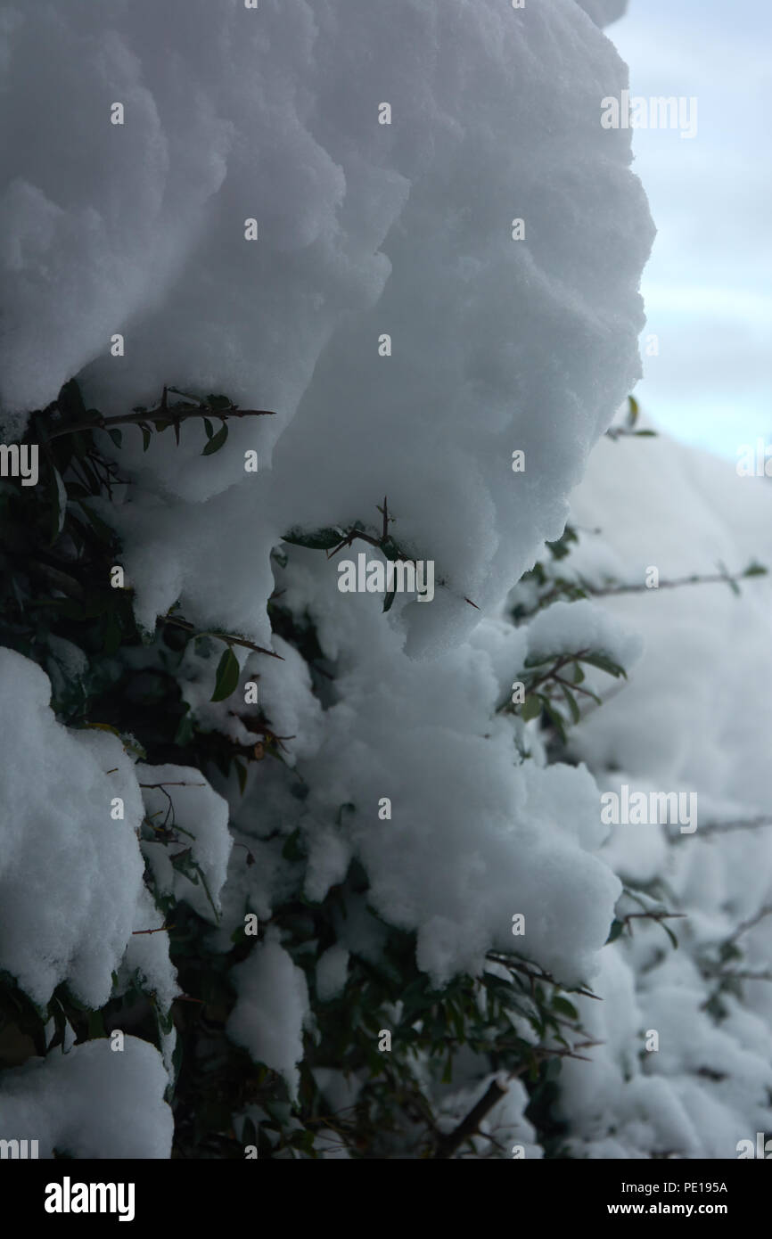 Winter and cold climate - Stock Image