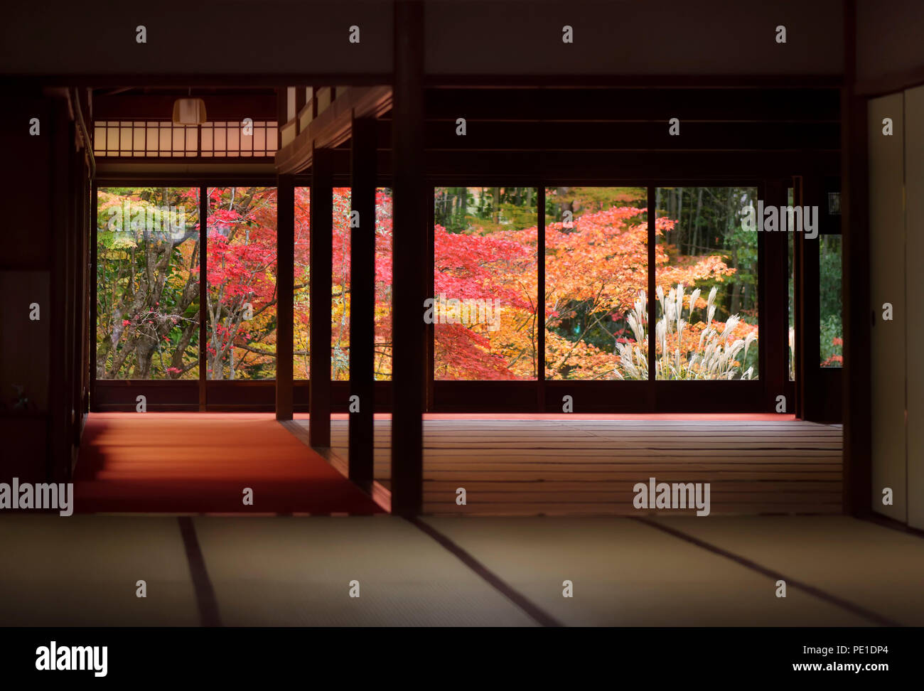 Traditional Japanese room interior with a beautiful colorful autumn nature scenery behind the windows. Tenjuan historic temple hall, Nanzen-ji complex - Stock Image