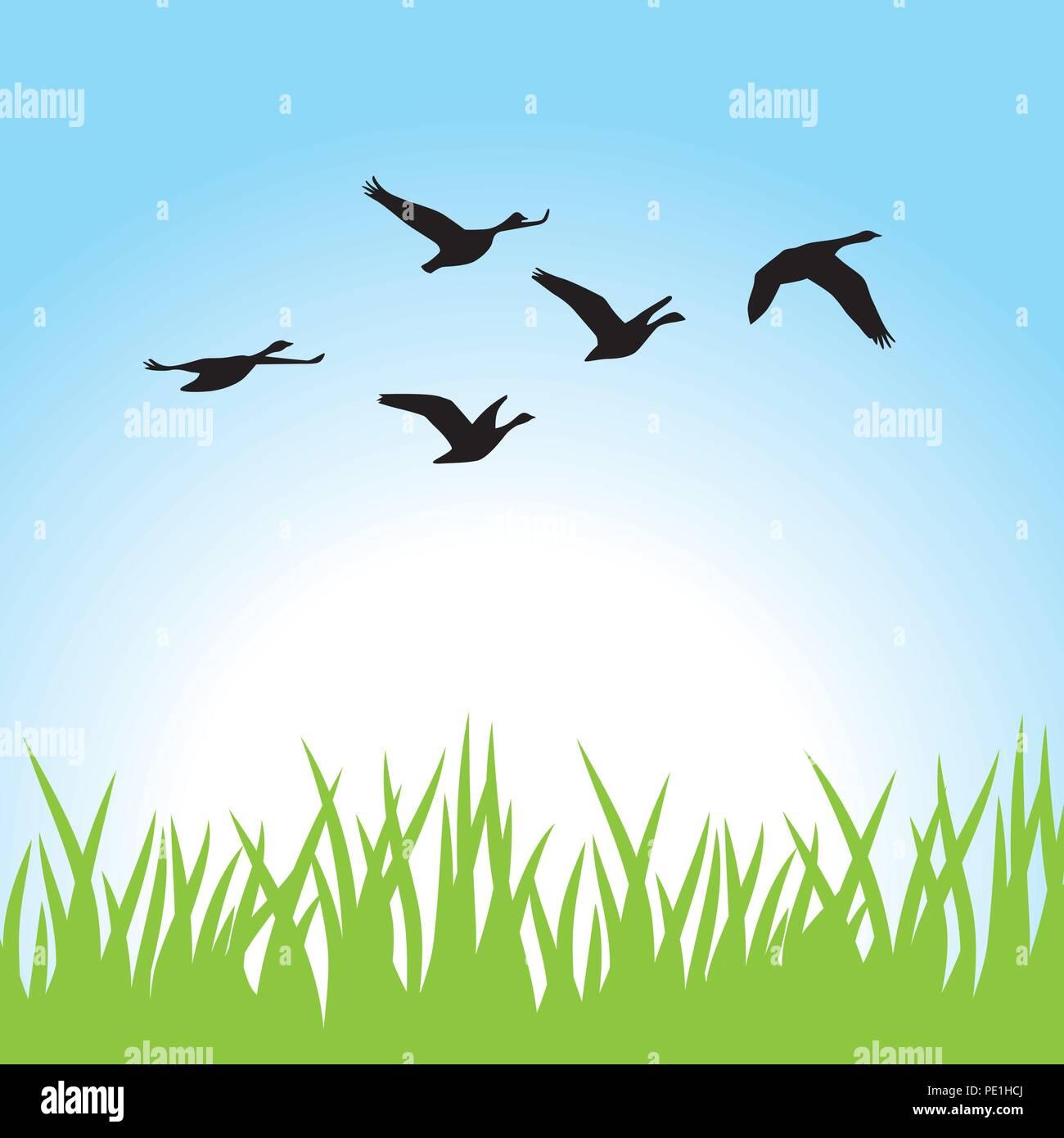 birds fly - Stock Vector
