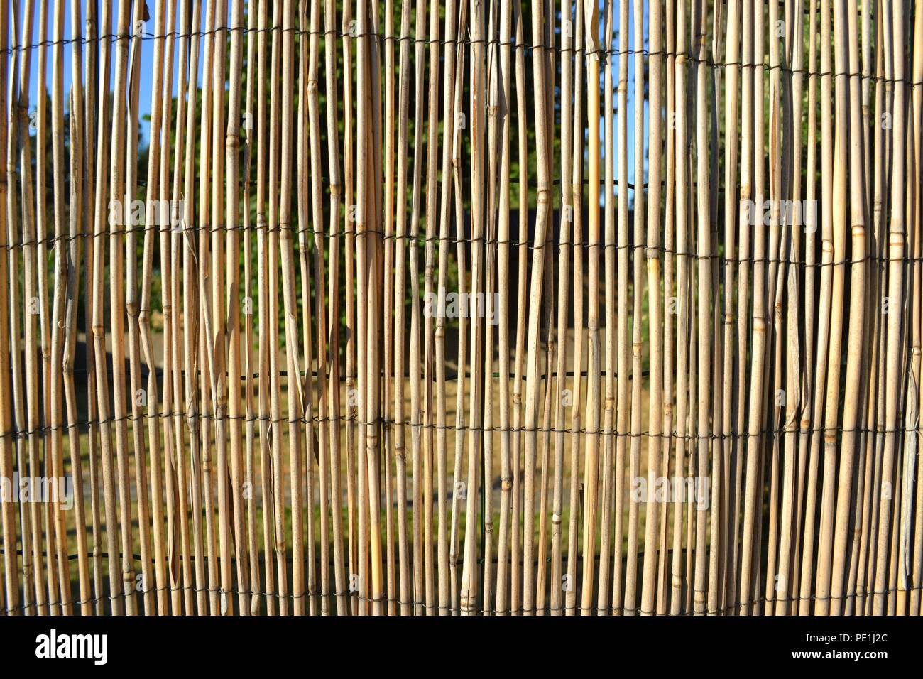 Closeup photograph of a bamboo divider between two suburban gardens. The photograph was taken on a sunny day. - Stock Image