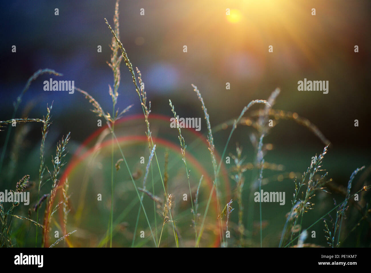 Camera sun flare over a green field during summer - summer concept Stock Photo
