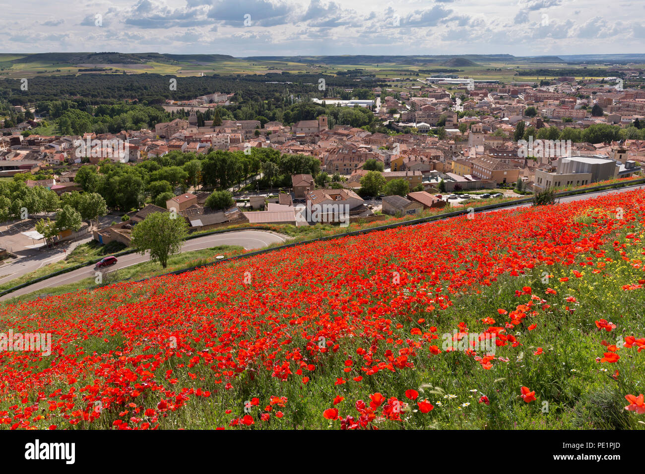 Peñafiel, Spain: Wildflower super bloom covers the ridge near Peñafiel Castle. Fields of poppies sprouted in the region after a wet spring ended month Stock Photo