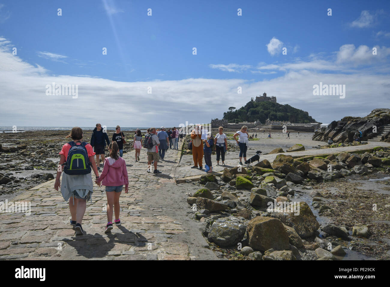 Marazion, Cornwall, UK. 12th August 2018. Anti trail hunt protestors , on the popular walkway to St Michaels Mount,  objecting to trail hunts taking place on National trust land. Credit: Simon Maycock/Alamy Live News - Stock Image