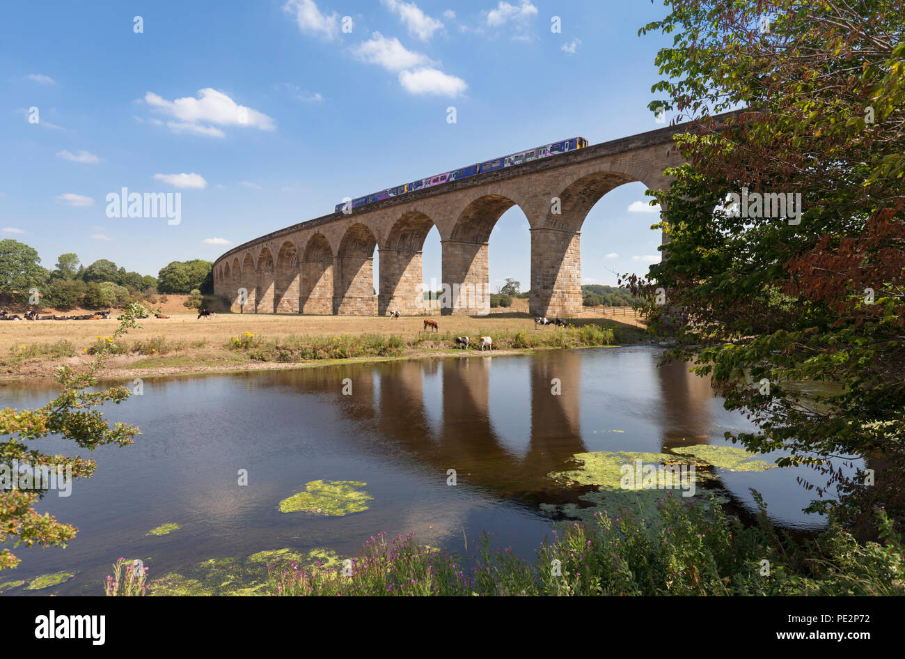 Northern rail class 150 sprinter +  class 142 pacer trains crossing the curved Wharfedale viaduct over the River Wharf on the Leeds to Harrogate line - Stock Image