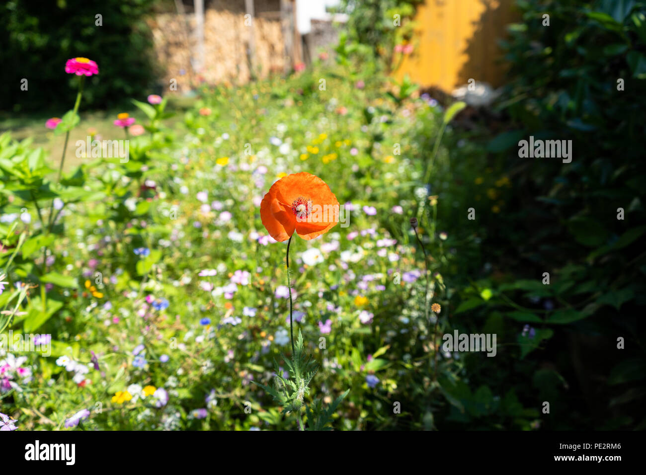 Many different beautiful flowers blossoming stock photos many beautiful flower meadow with a lot of different flowers and blossoms stock image izmirmasajfo