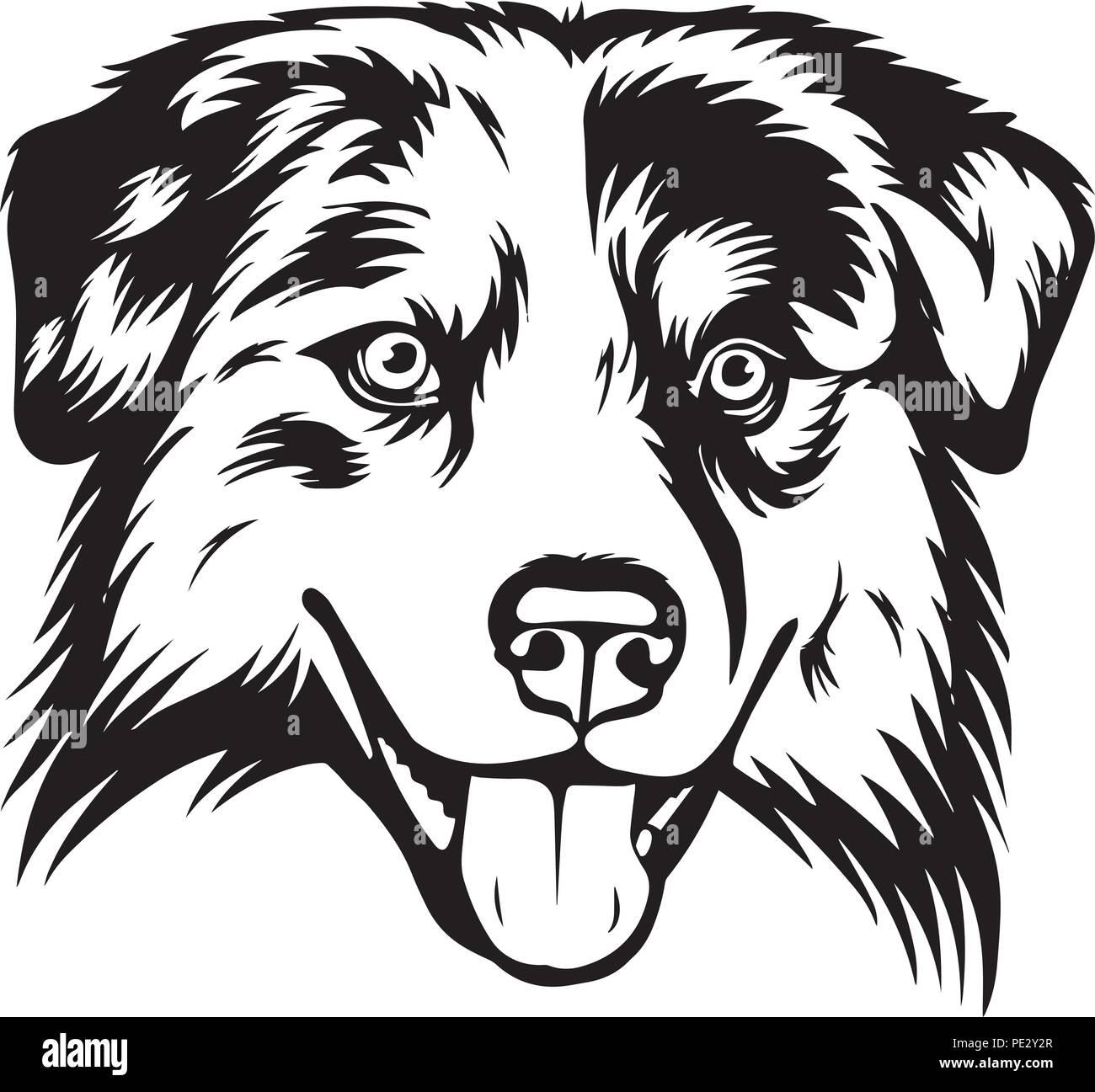Australian Shepherd Dog Breed Pet Puppy Isolated Head Face Stock Vector