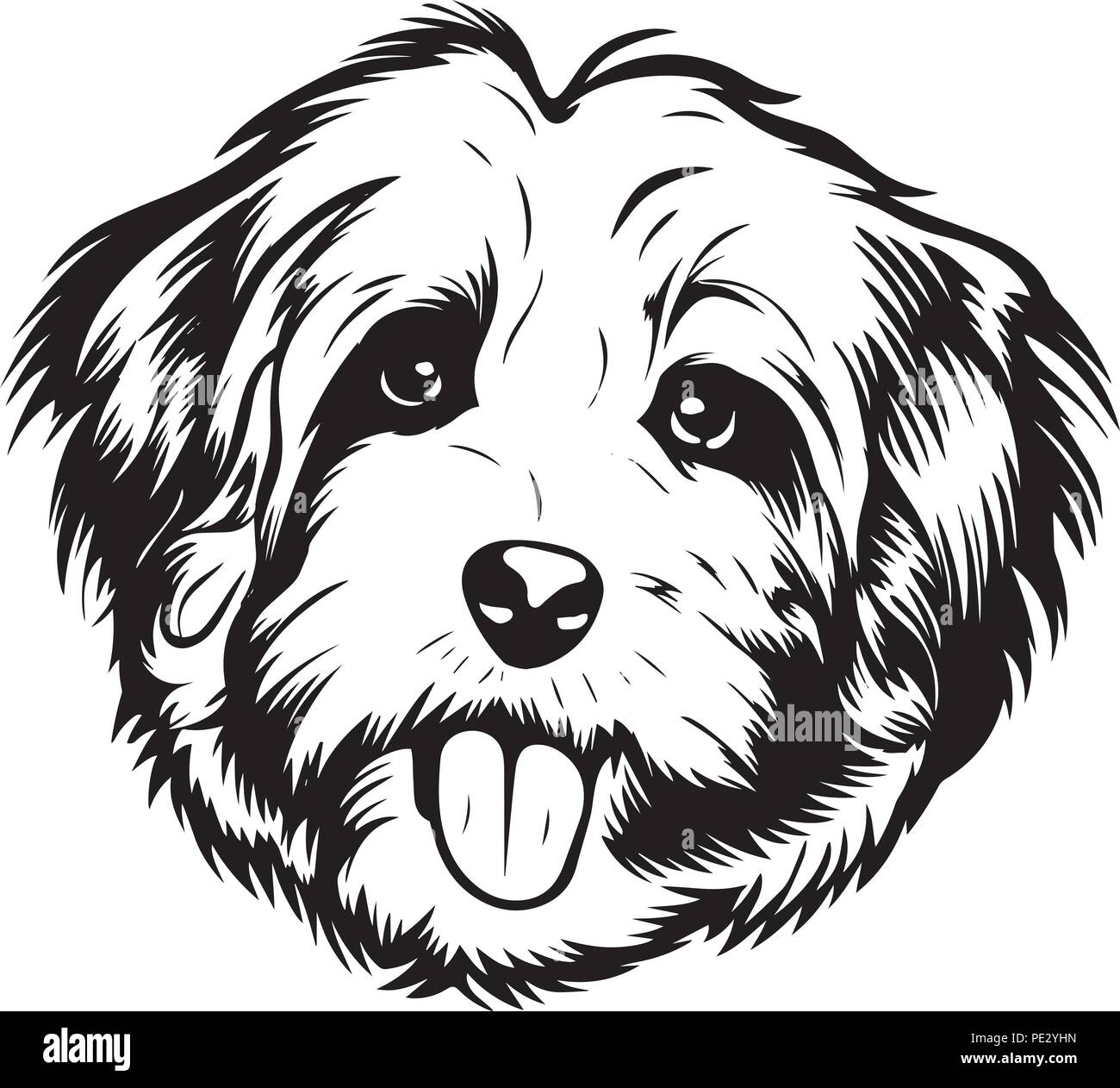 Havanese Dog Breed Pet Puppy Isolated Head Face Stock Vector