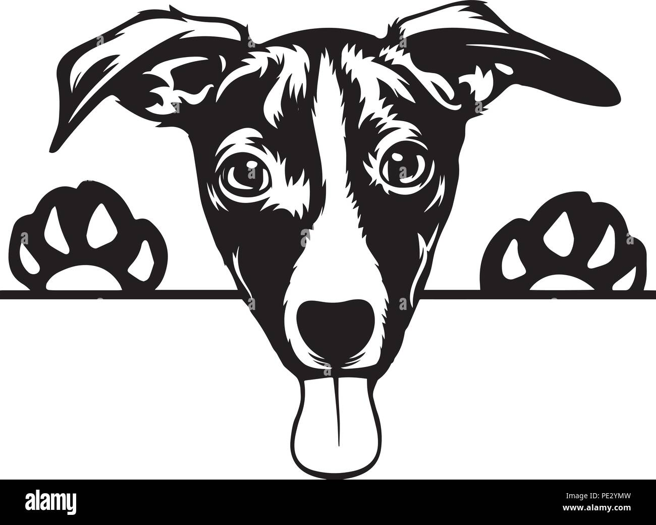 Jack Russell Terrier Dog Breed Pet Puppy Isolated Head Face Stock Vector