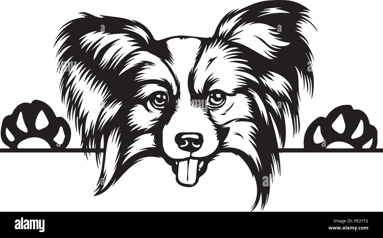 Papillon Dog Dog Breed Pet Puppy Isolated Head Face Stock Vector