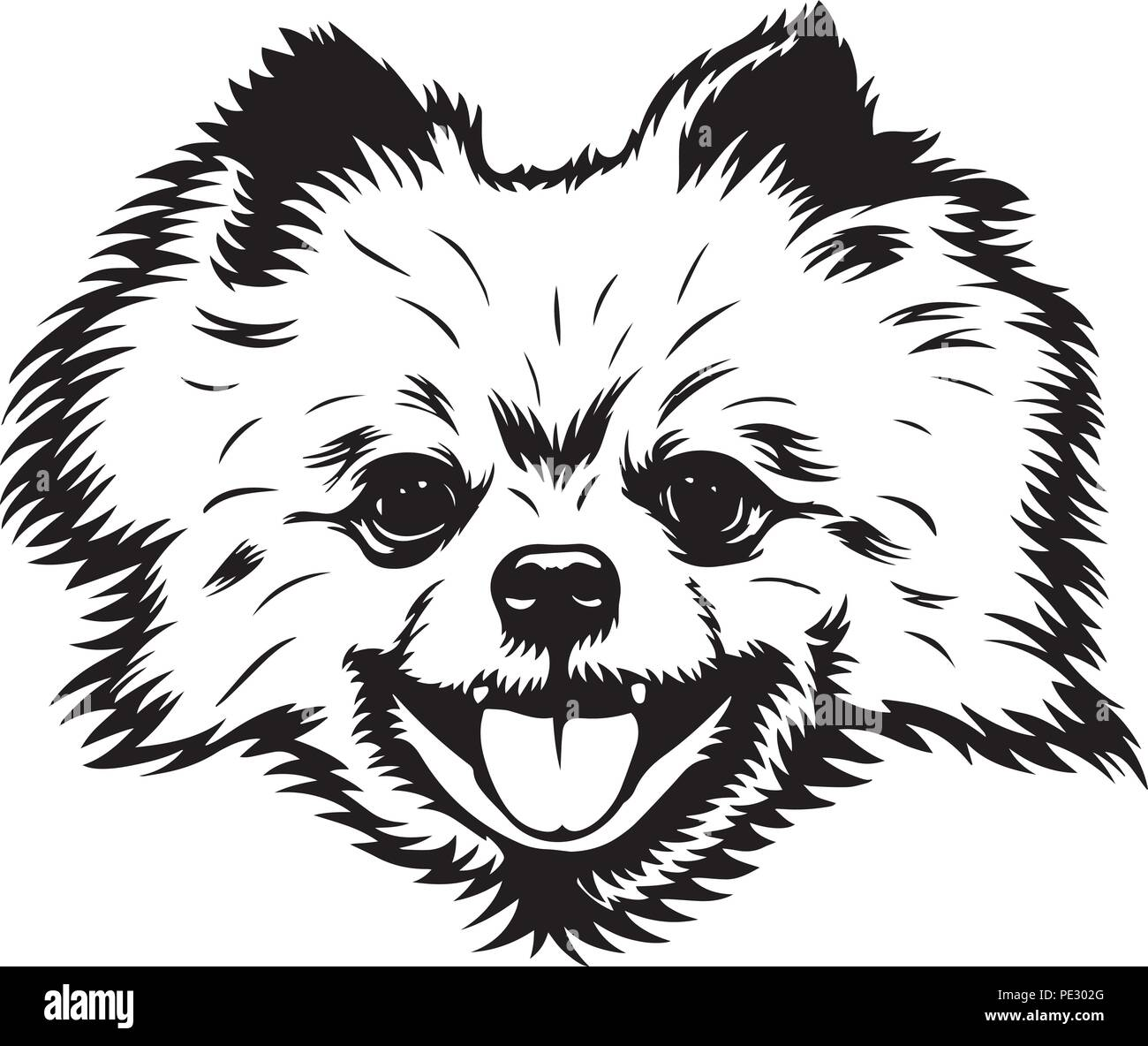 Pomeranian Dog Dog Breed Pet Puppy Isolated Head Face Stock Vector