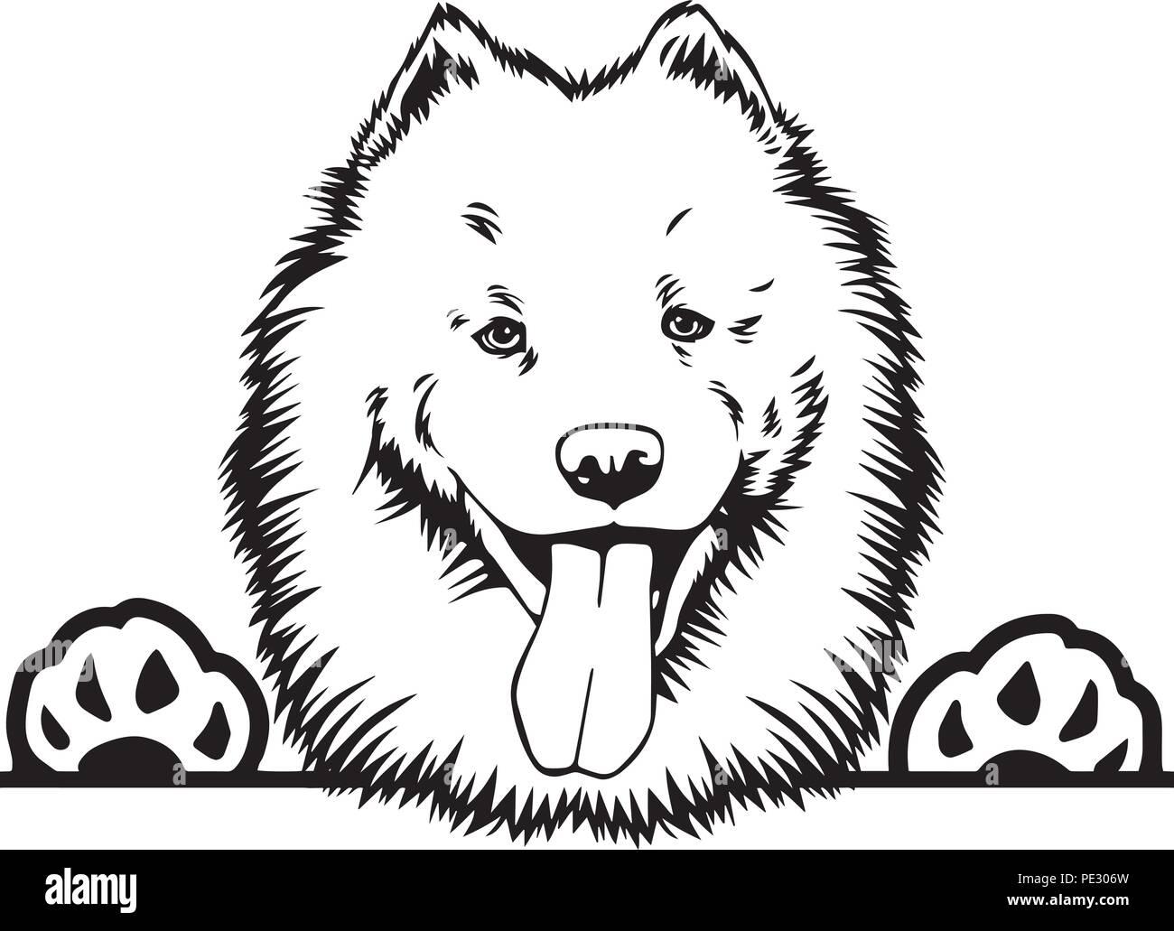 Samoyed Dog Breed Pet Puppy Isolated Head Face Stock Vector Art