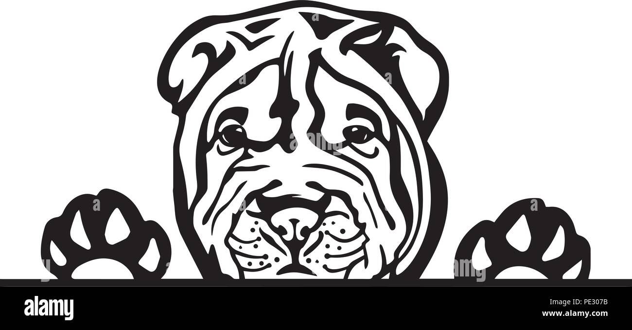 Shar Pei Dog Breed Pet Puppy Isolated Head Face Stock Vector