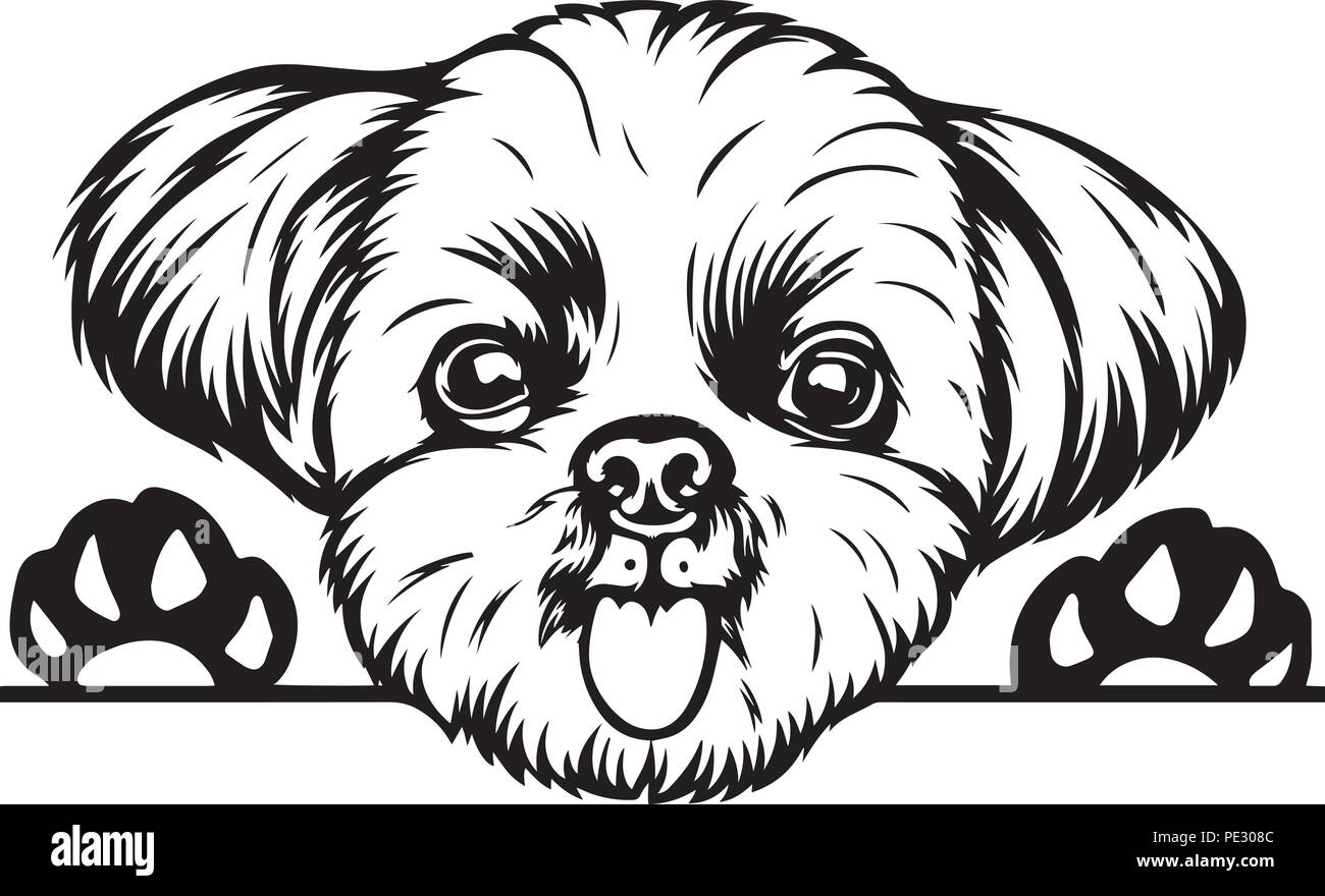 Shih Tzu Dog Breed Pet Puppy Isolated Head Face Stock Vector