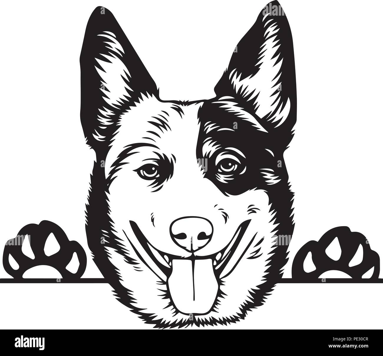 Australian Cattle Dog Breed Pet Puppy Isolated Head Face Stock Vector
